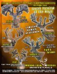 RWJ Whitetails - Whitetail Deer Farmer - Page 7