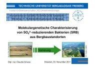 Molekulargenetische Charakterisierung von SO 2 ... - GWZ Dresden
