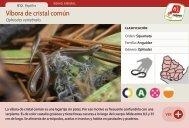 Víbora de cristal común - Manosanta