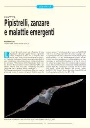Pipistrelli, zanzare e malattie emergenti - Chiroptera Italica