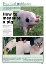 How to Measure a Pig