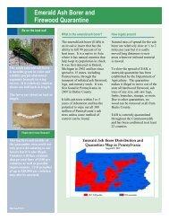 Emerald Ash Borer and Firewood Quarantine
