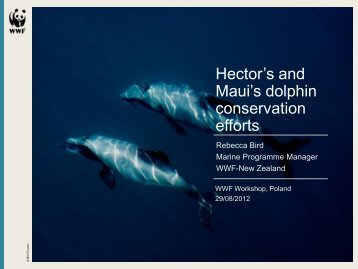 Hectors and Maui's Dolphins - WWF