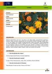 Lantana camara L. Lantana - Interreg Bionatura