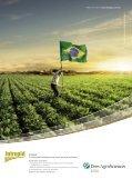 em grão - Brazil Buyers & Sellers - Page 3