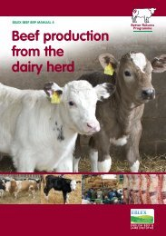Manual 4 - Beef production from the dairy herd - Eblex
