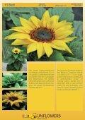Katalog 2011 - Theo Gauweiler - Seite 5