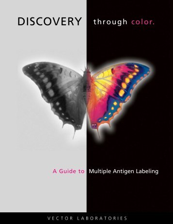 Multiple Antigen Labeling - Vector Laboratories