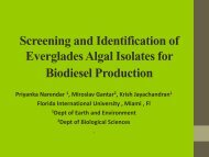 Screening and Identification of Everglades Algal Isolates for ...