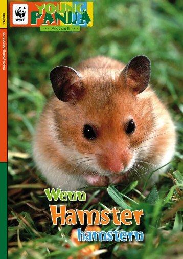 Wenn hamstern - Young Panda