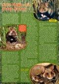 Wenn hamstern - Young Panda - Seite 3