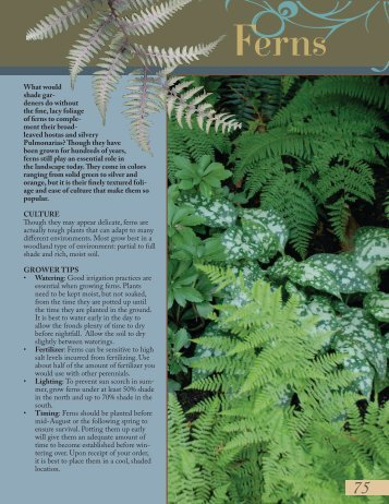 Ferns-Geum - Proven Winners