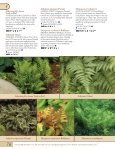 Ferns-Geum - Proven Winners - Page 2