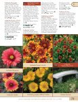 Ferns-Geum - Proven Winners - Page 5