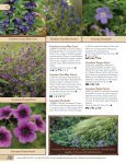 Ferns-Geum - Proven Winners - Page 6