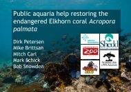 Public aquaria help restoring the endangered Elkhorn coral ...