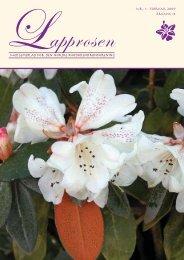 Utgave nr 1 - Den norske Rhododendronforening