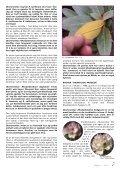 Utgave nr 1 - Den norske Rhododendronforening - Page 7