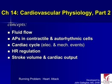 Chapter 14: Cardiovascular Physiology, Part 2