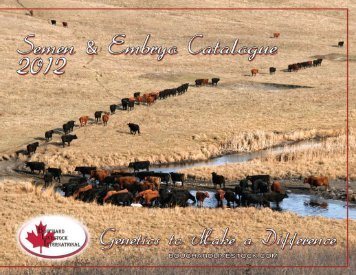 Full Throttle - Bouchard Livestock International