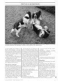 Fukosidos hos engelsk springer spaniel Gener, etik ... - Doggy Rapport - Page 3