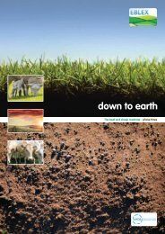 Down to earth:The English beef and sheep production ... - Eblex