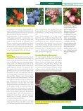 Salvestrole – Neue Möglichkeiten der Krebsbehandlung Salvestrole ... - Seite 7