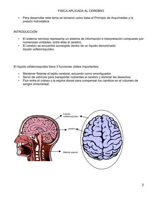 Qué fluido rodea el cerebro