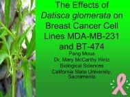 Datisca glomerata - California State University, Sacramento