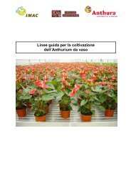 Linee guida per la coltivazione dell'Anthurium da vaso - Anthura