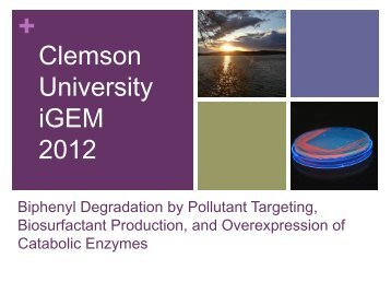 Clemson Presentation - iGEM 2012