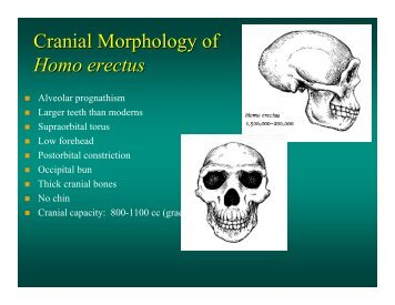 Cranial Morphology of Homo erectus