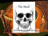 5/The skull - Sinoe medical homepage.