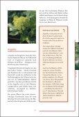 Klostermedizin Kern - Seite 6