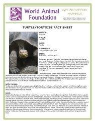 TURTLE/TORTOISE FACT SHEET - World Animal Foundation