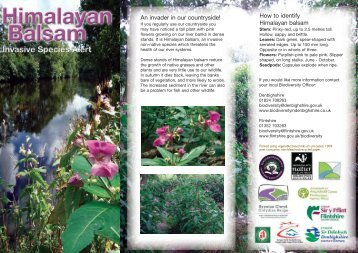 How to identify Himalayan balsam An invader in our countryside!