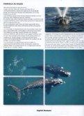 ver enlace - Instituto de Conservación de Ballenas - Page 6