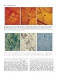 In vivo angiogenic activity of urokinase: role - Journal of Cell ... - Page 4