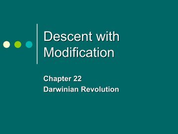 descent w modification