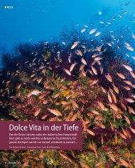Dolce Vita in der Tiefe - Ponza.com