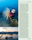 Dolce Vita in der Tiefe - Ponza.com - Seite 4