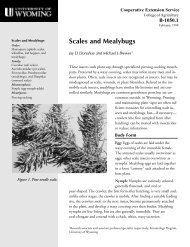 Scales and Mealybugs