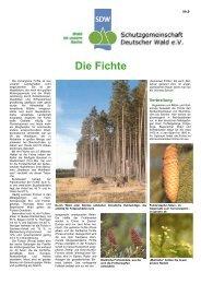 Die Fichte - SDW - Schutzgemeinschaft Deutscher Wald