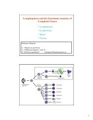 Lymphopoiesis and the Functional Anatomy of Lymphoid Tissues
