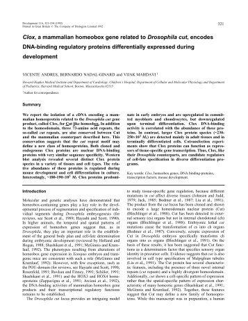 Clox, a mammalian homeobox gene related to Drosophila cut ...