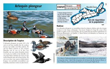Arlequin plongeur - Species at Risk
