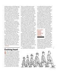 Evolving heart - Elie Dolgin