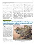 download the FrogLog 91 - Amphibian Specialist Group - Page 4