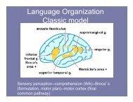Language Organization Classic model