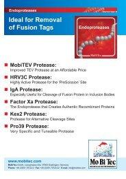 IgA Protease